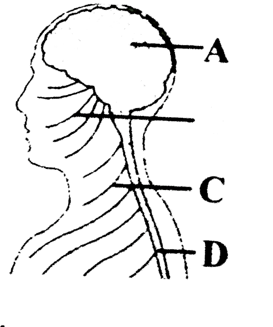 In The Accompanying Diagram Of A Part Of The Human Body The Struc