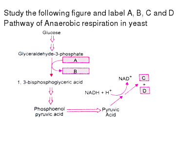 Which statement is wrong for anaerobic respiration.